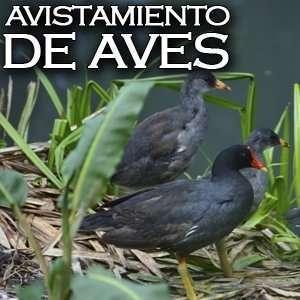 Avistamiento de aves - Turismo de observación de aves en Bogotá y Cundinamarca